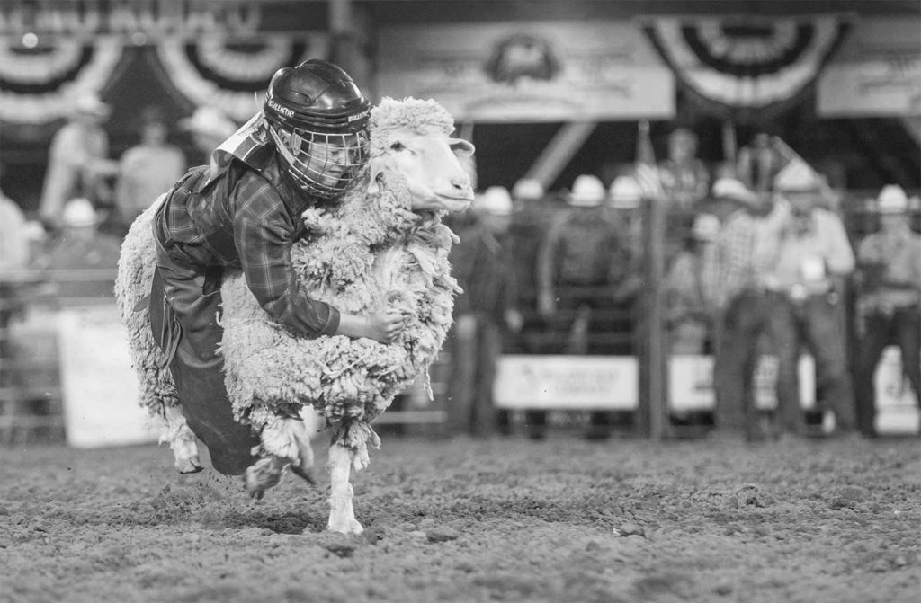 Black And Whitecowboy Participant In A Bull Riding Competition At The Reno Rodeo
